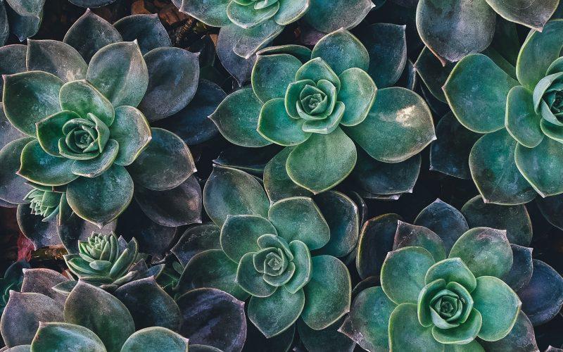 Plantas se extinguen a niveles altísimos