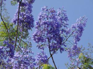 600 plantas se han extinto en 250 años