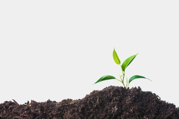 Plantas se están extingiendo