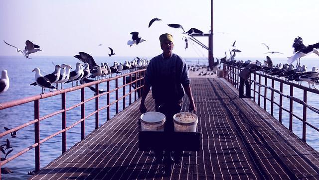 aves quinta region agencia uno tomate rojo freshblue 335x160 - Alerta por posible intoxicación de aves en la playa Loncura