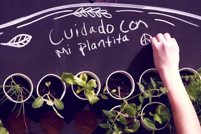 plantas agencia uno freshblue 288x180 - Plantas se están extinguiendo más rápido que nunca: ya van 600 especies