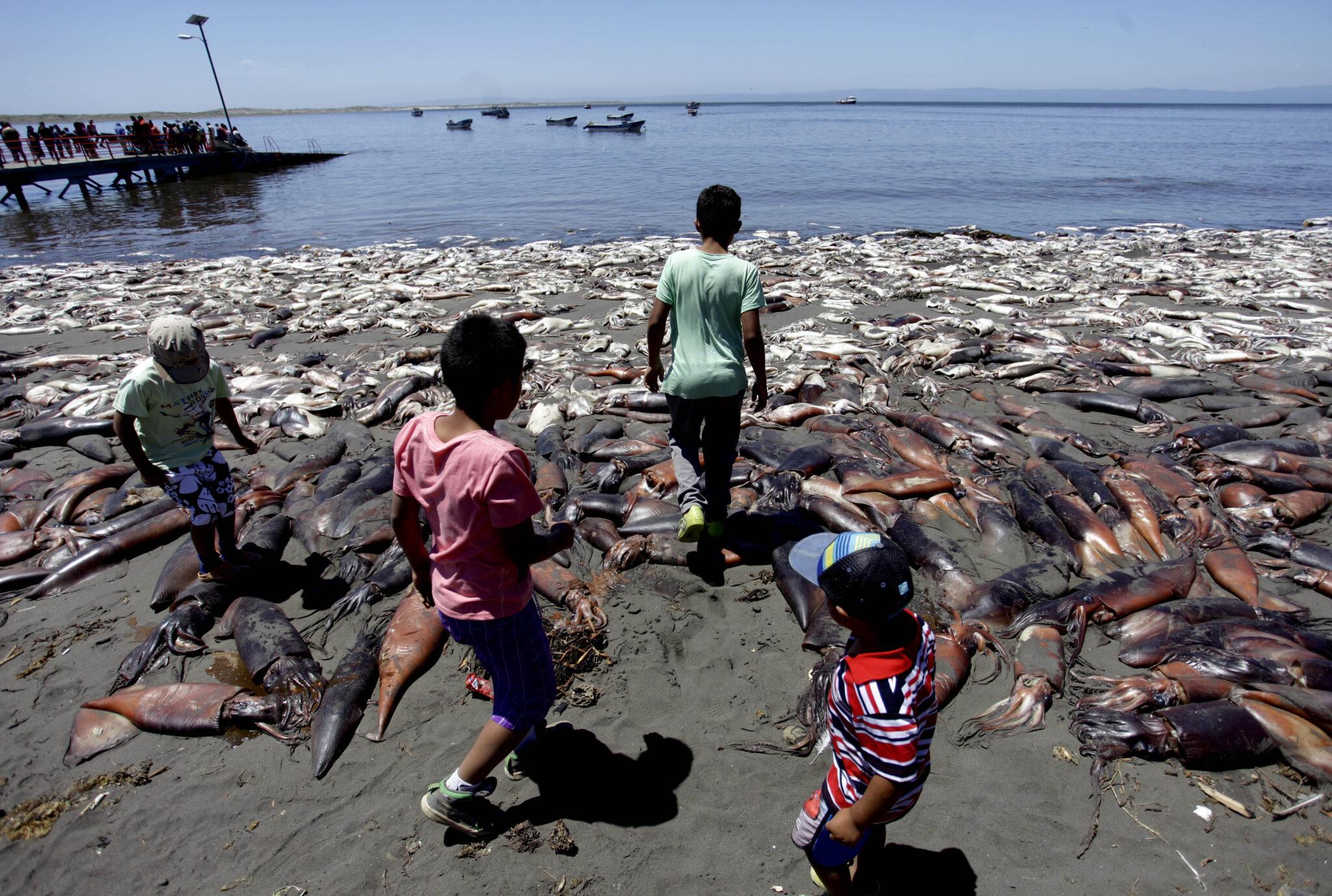 A UNO 627227 183x96 - Crisis Sanitaria en Isla Santa María: devastadoras imágenes de hambruna que ha dejado más de 100 animales muertos