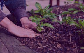 cómo empezar a plantar desde cero: almácigo