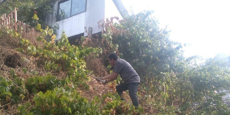 Photo of Agricultura urbana en Valparaíso y las huellas de su historia