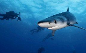 amenazas que sufren los tiburones de Chile