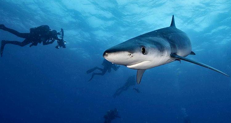 Photo of Las amenazas que sufren los tiburones de Chile