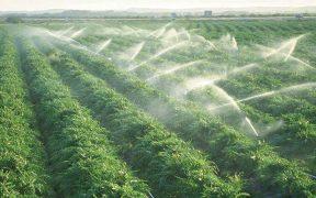 contaminación del agua a causa de la producción agrícola