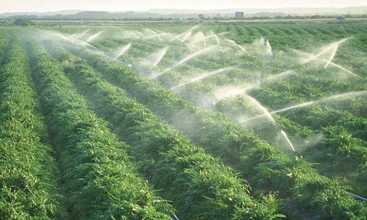 Photo of Contaminación del agua a causa de la producción agrícola en Chile