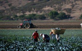 empresas agrícolas del Maule son focos de coronavirus