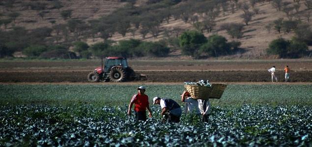 Photo of Cuatro empresas agrícolas del Maule se mantienen como foco de contagio de covid 19