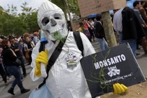 Tribunal Constitucional falla a favor de Monsanto