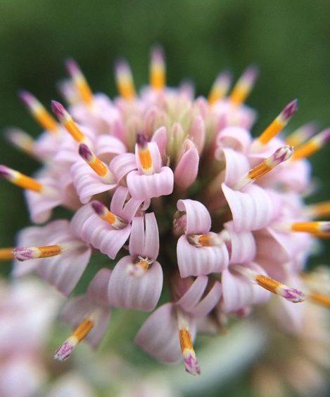 Fotografía Flora