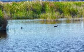 Humedal de Batuco