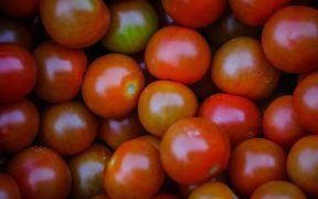 cómo cultivar tomate