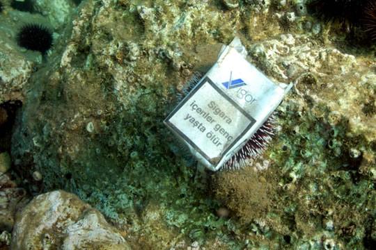 """Photo of Por qué las colillas de cigarros son un """"cáncer medioambiental"""""""