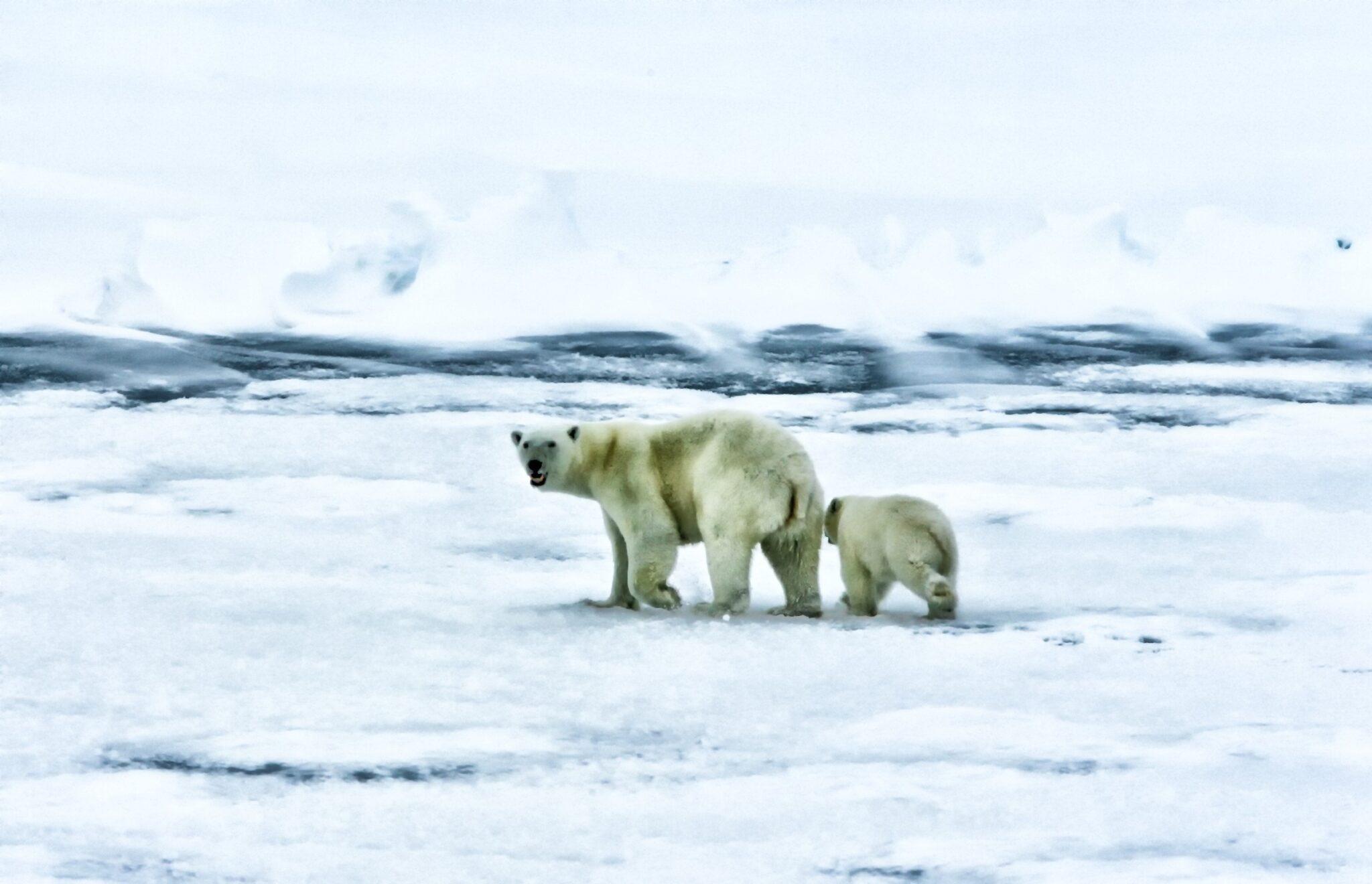 Photo of Cambio climático en el Ártico: pérdida de glaciares y formación de nuevas islas