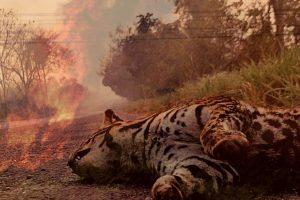 Pantanal sufre peor incendio en décadas