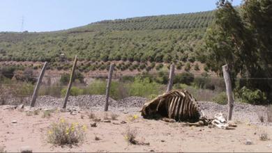 Photo of Cuando la sequía y el saqueo se cruzan: la crisis del agua en Chile es catastrófica