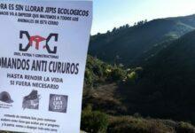"""Photo of """"Salvemos el bosque de Reñaca"""" tras violentas amenazas: """"No nos da miedo y tampoco vamos a bajar los brazos"""""""