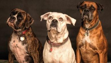 Photo of Importante estudio logró revelar cuándo y cómo aparecieron las distintas razas de perros