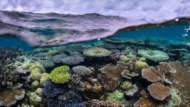 Photo of Pristine Seas: el proyecto que busca proteger los últimos lugares salvajes de los océanos