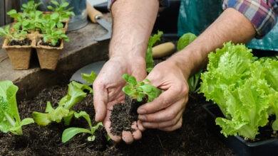 Photo of Qué plantar en octubre en el hemisferio sur