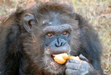 Día del Orgullo Primate