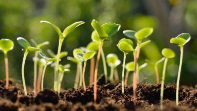 qué plantar en noviembre