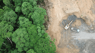 deforestacion global