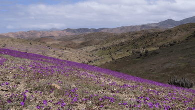 Asamblea de Atacama