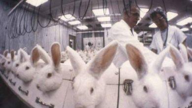 experimentación en animales