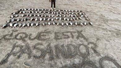aves en playa de Iquique